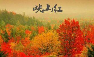 刀郎红色经典歌曲《映山红》