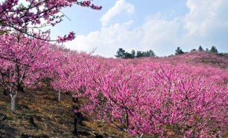 董振厚军旅歌曲《在那桃花盛开的地方》试听有感